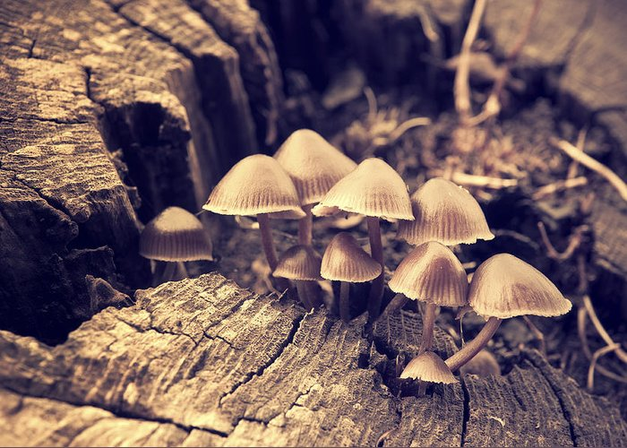 Autumn Greeting Card featuring the photograph Wild Mushrooms by Amanda Elwell
