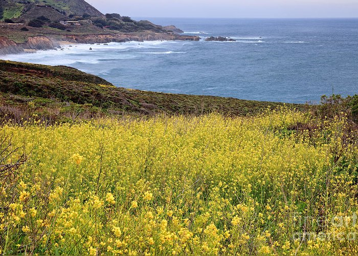 Big Sur Greeting Card featuring the photograph Wild Mustard At The Shore by Stuart Gordon
