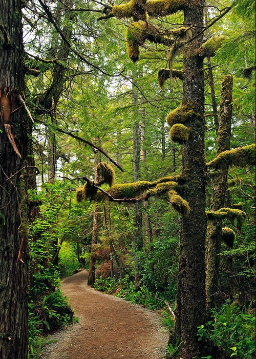 Ucluelet Greeting Card featuring the photograph Wild Pacific Trail by Ron Ritchey