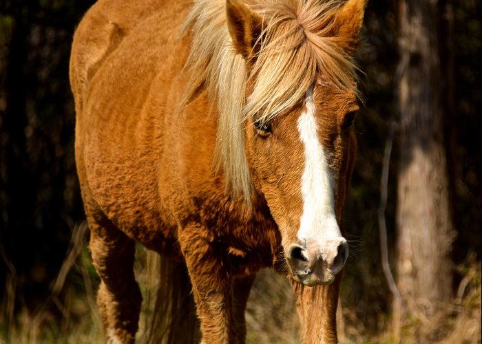 Assateague Greeting Card featuring the photograph Wild Pony by Kathi Isserman