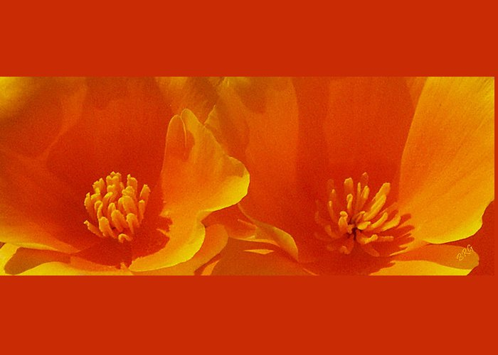 California Poppies Greeting Card featuring the photograph Wild Poppies by Ben and Raisa Gertsberg