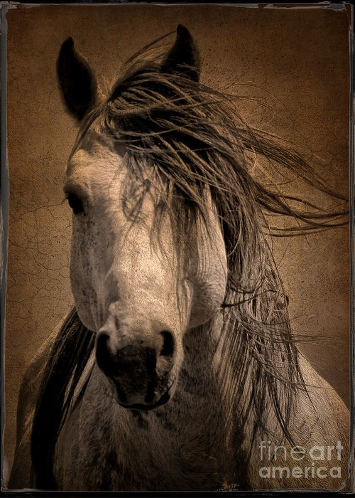 Colorado Greeting Card featuring the digital art Wild Stallion by Tony Bruguiere