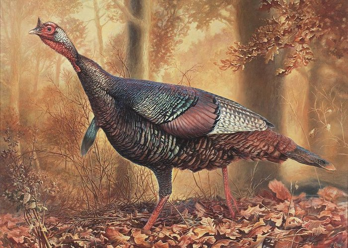 Wild Turkey Greeting Card featuring the painting Wild Turkey by Hans Droog