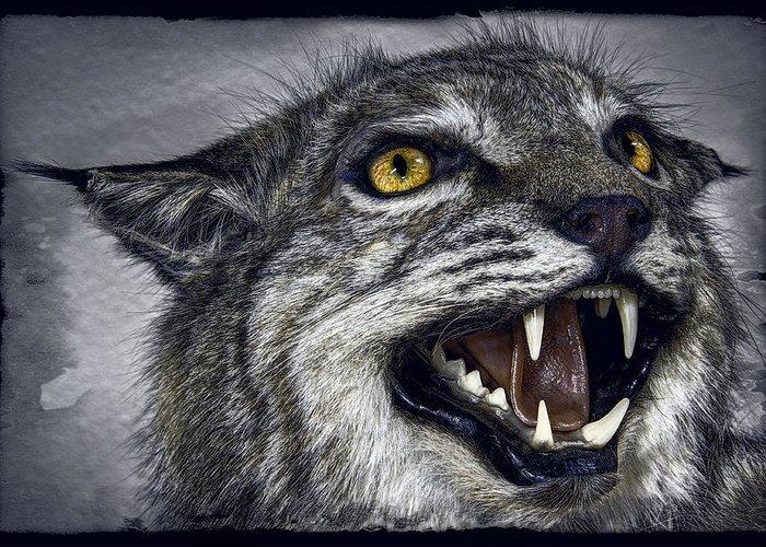 Wildcat Greeting Card featuring the photograph Wildcat Ferocity by Daniel Hagerman