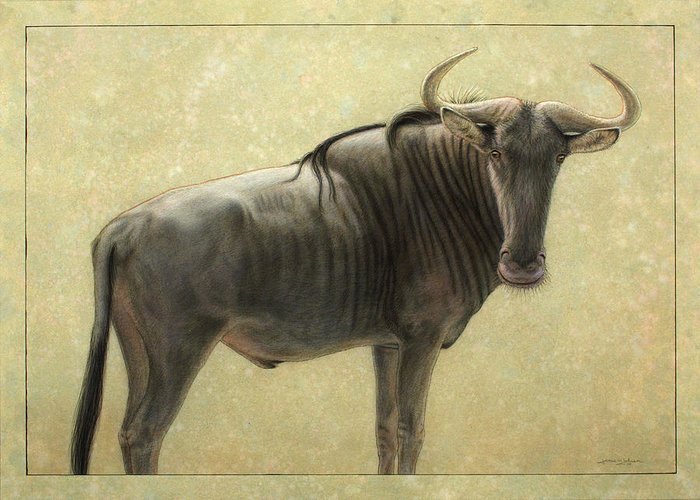 Wildebeest Greeting Card featuring the painting Wildebeest by James W Johnson