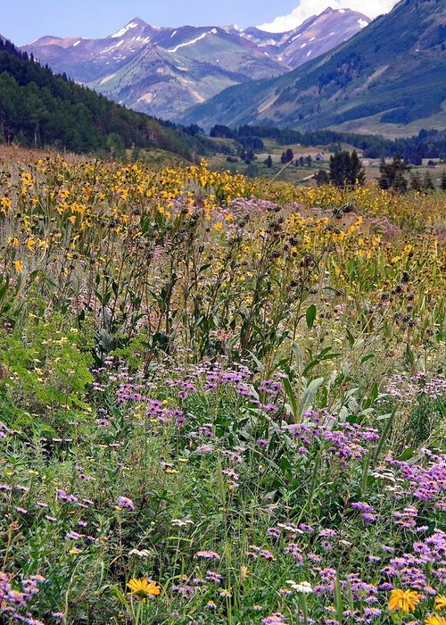 Field Of Wildflowers Greeting Card featuring the photograph Wildflowers And Mountains by Sally Weigand