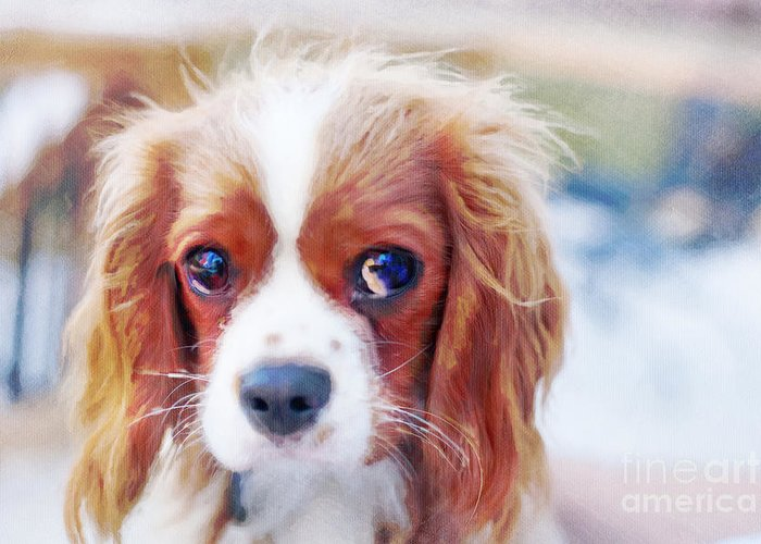 Cavalier Greeting Card featuring the photograph Will You Play With Me by Kay Pickens