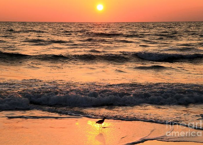 St Joseph Peninsula State Park Greeting Card featuring the photograph Willet In The Spotlight by Adam Jewell
