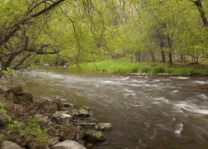Willow Greeting Card featuring the photograph Willow River 3 by John Brueske