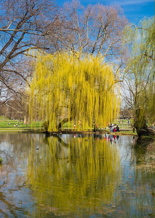 Willow Greeting Card featuring the photograph Willow Tree Water Reflection by Matthias Hauser
