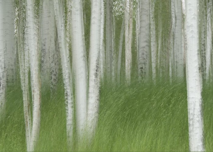 Colorado Greeting Card featuring the photograph Wind In The Aspen by Nancy Myer