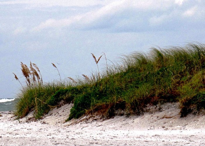 Beach Greeting Card featuring the photograph Wind In The Seagrass by Ian MacDonald