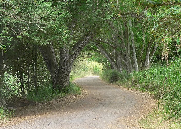 Road Greeting Card featuring the photograph Winding Country Road by John Orsbun