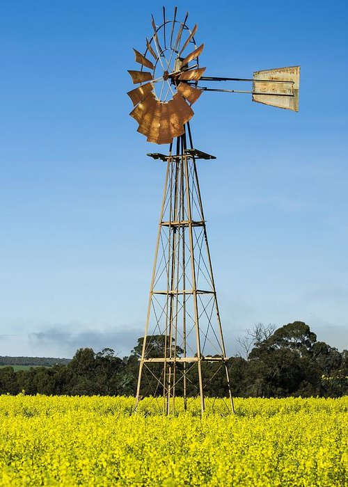 Brassica Napus Greeting Card featuring the photograph Windmill In A Canola Field by Science Photo Library