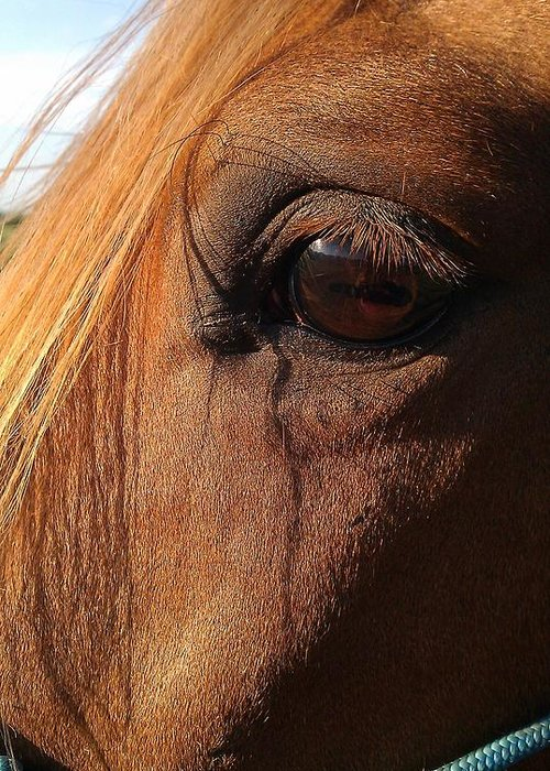Horse Greeting Card featuring the photograph Window To The Soul by Darlene Rodgers