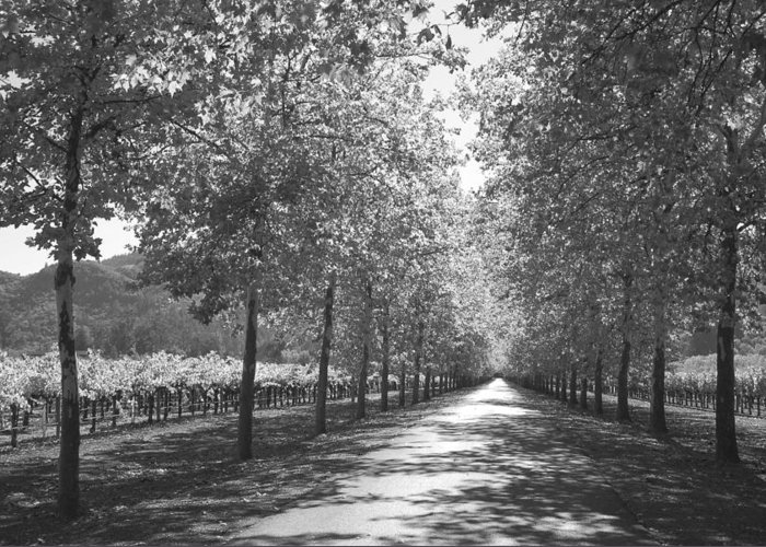 Black And White Greeting Card featuring the photograph Wine Country Napa Black And White by Suzanne Gaff