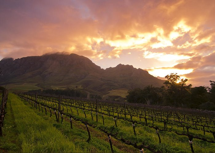 Wine Greeting Card featuring the photograph Wineland Sunrise by Aaron Bedell