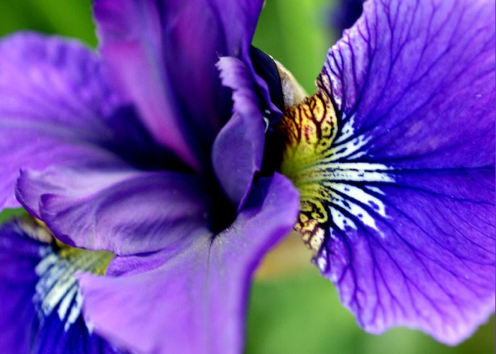 Iris Greeting Card featuring the photograph Wings II by Valerie Fuqua