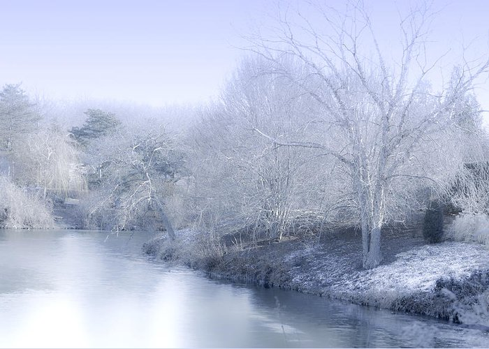 Beauty Greeting Card featuring the photograph Winter Blue And White by Julie Palencia
