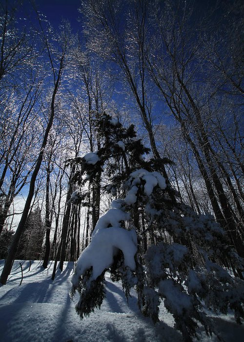 Winter Greeting Card featuring the photograph Winter Blue by Karol Livote