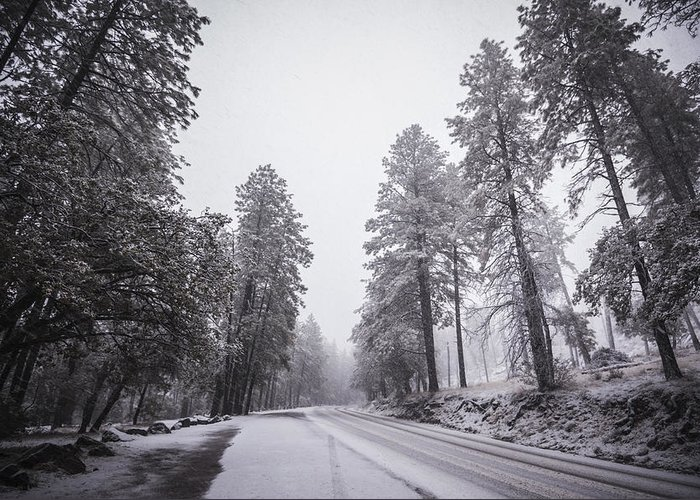 Winter Storm Greeting Card featuring the photograph Winter Driven by Anthony Citro