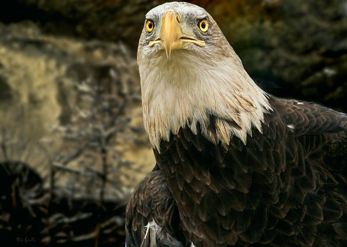Eagle Greeting Card featuring the photograph Winter Eagle by Bob Orsillo