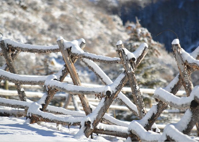 Winter Greeting Card featuring the photograph Winter Fence Line by Dorothea Hanson