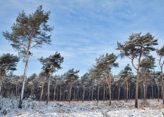 Beautiful Greeting Card featuring the photograph Winter Forest Covered With Snow by Dirk Ercken