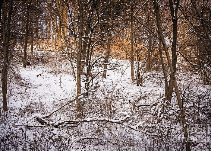 Winter Greeting Card featuring the photograph Winter Forest by Elena Elisseeva