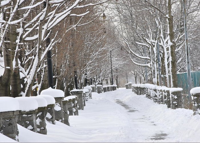Winter Greeting Card featuring the photograph Winter by Frederico Borges