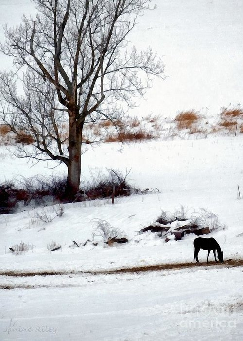 Grazing Snow Digital Art Greeting Cards