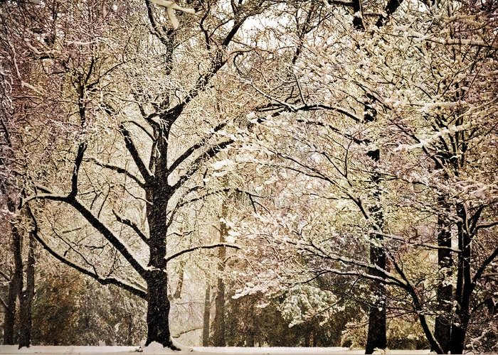 Landscape Greeting Card featuring the photograph Winter In St. Louis by Marty Koch