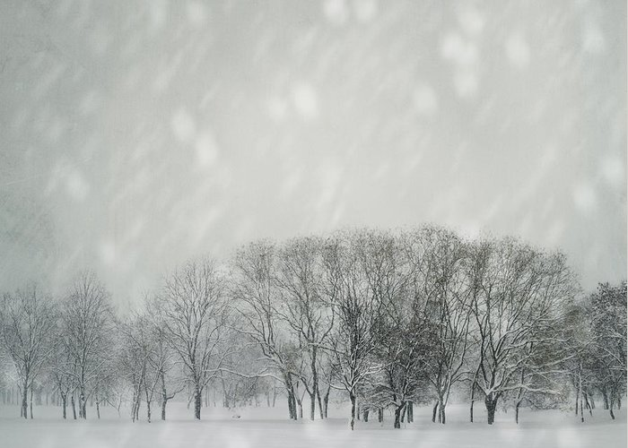Winter Greeting Card featuring the photograph Winter by Jelena Jovanovic