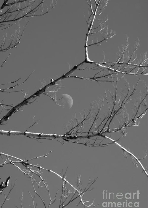 Moon Greeting Card featuring the photograph Winter Moon by Elaine Mikkelstrup