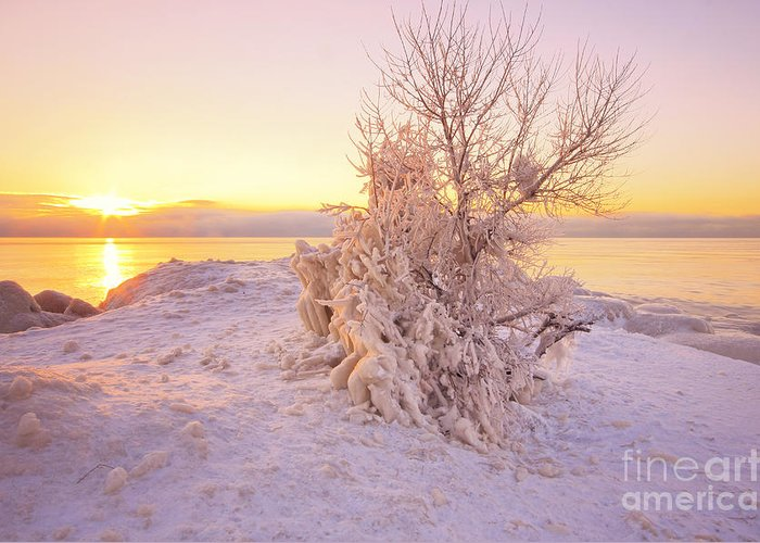 Winter Greeting Card featuring the photograph Winter Sunrise by Charline Xia