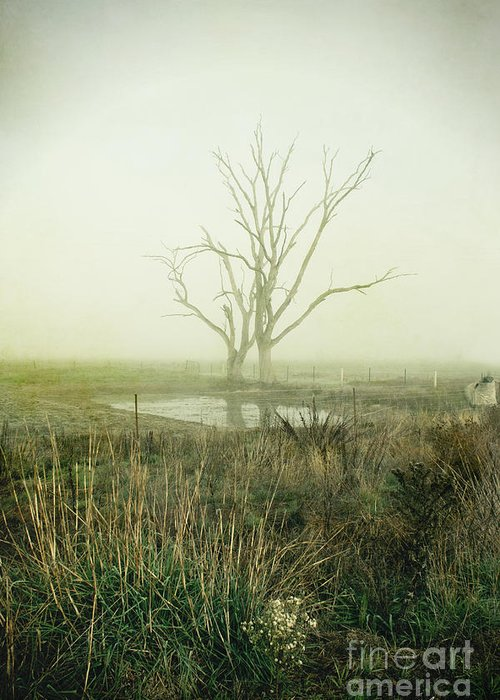 Winter Greeting Card featuring the photograph Winter Morning Londrigan 1 by Linda Lees