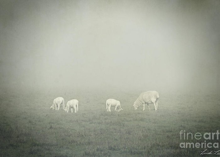 Winter Greeting Card featuring the photograph Winter Morning Londrigan 3 by Linda Lees