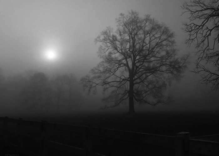 Landscape Greeting Card featuring the photograph Winter Oak In Fog by Deborah Smith