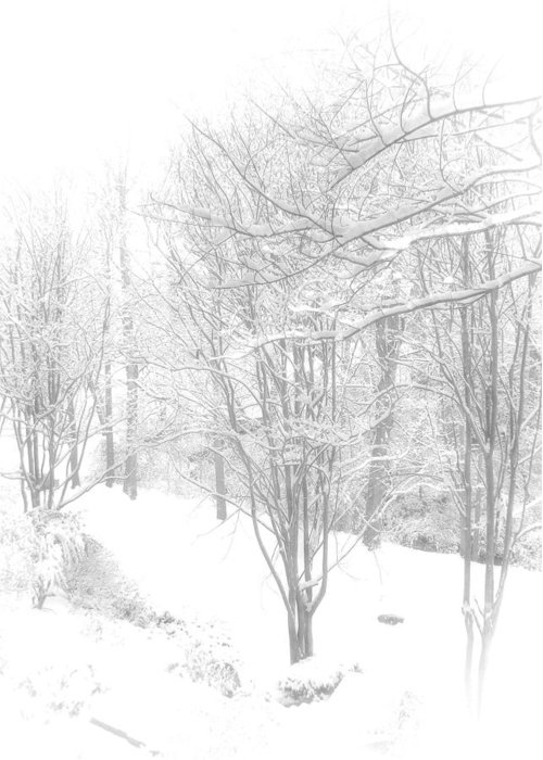 Winter Greeting Card featuring the photograph Winter Of '14 by Larry Bishop
