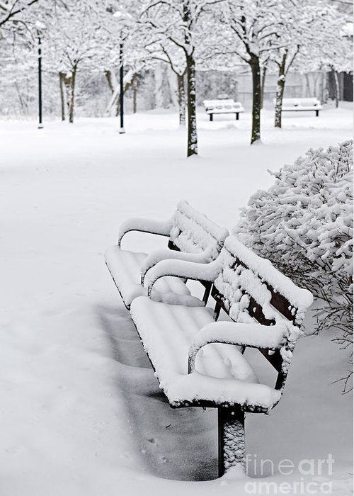 Winter Greeting Card featuring the photograph Winter Park With Benches by Elena Elisseeva