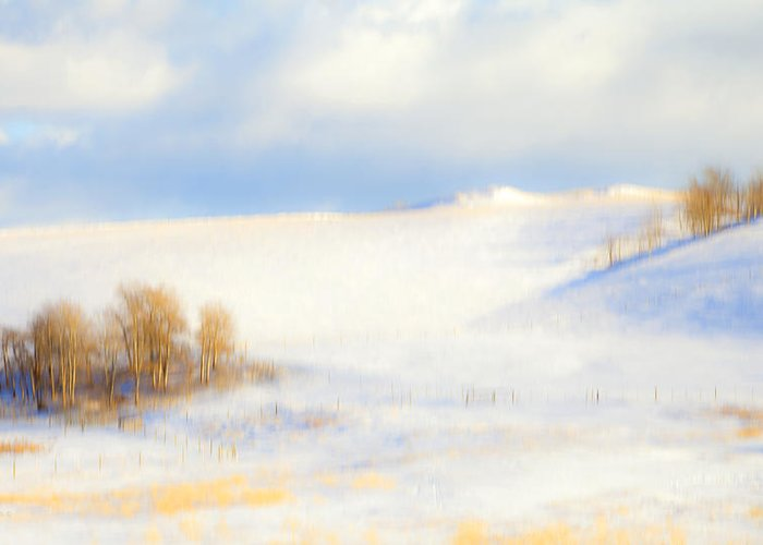Winter Greeting Card featuring the photograph Winter Poplars by Theresa Tahara