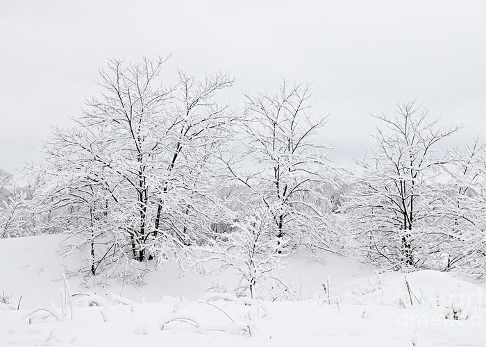 Photography Greeting Card featuring the photograph Winter Scene by Larry Ricker