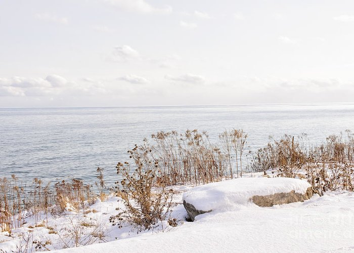 Plants Greeting Card featuring the photograph Winter Shore Of Lake Ontario by Elena Elisseeva