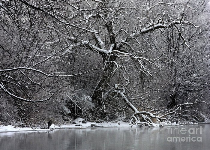 Winter Greeting Card featuring the photograph Winter Solitude by Carol Groenen