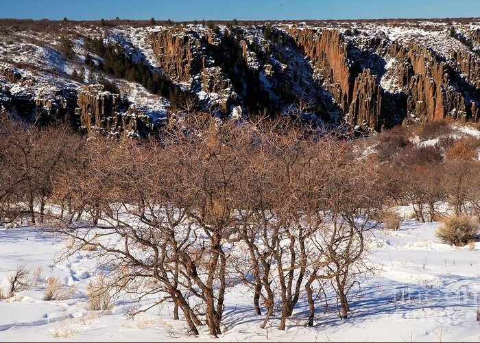 Black Canyon Of The Gunnison Greeting Card featuring the photograph Winter Sprouts by Adam Jewell