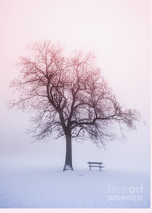 Trees Greeting Card featuring the photograph Winter Tree In Fog At Sunrise by Elena Elisseeva