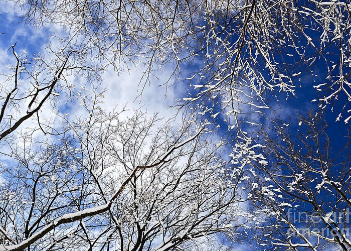 Winter Greeting Card featuring the photograph Winter Trees And Blue Sky by Elena Elisseeva