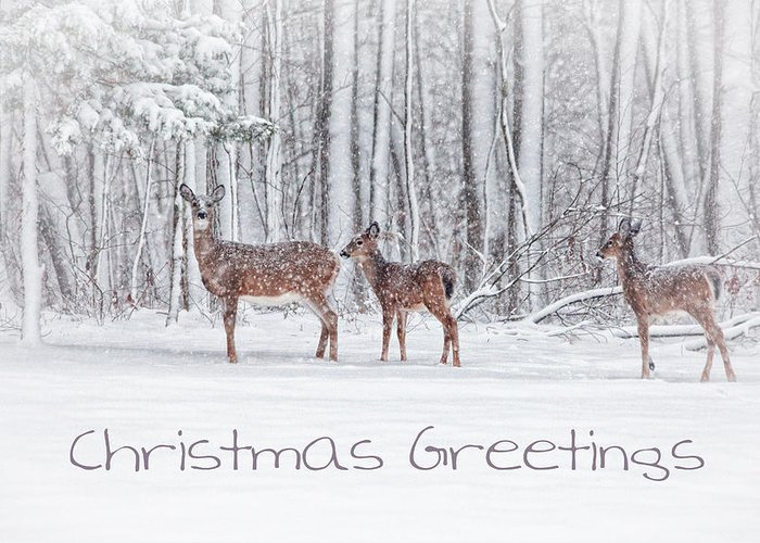 Deer Greeting Card featuring the photograph Winter Visits Card by Karol Livote
