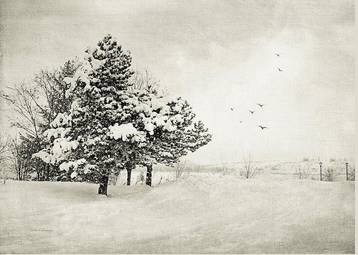 Winter Greeting Card featuring the photograph Winter White by Julie Palencia