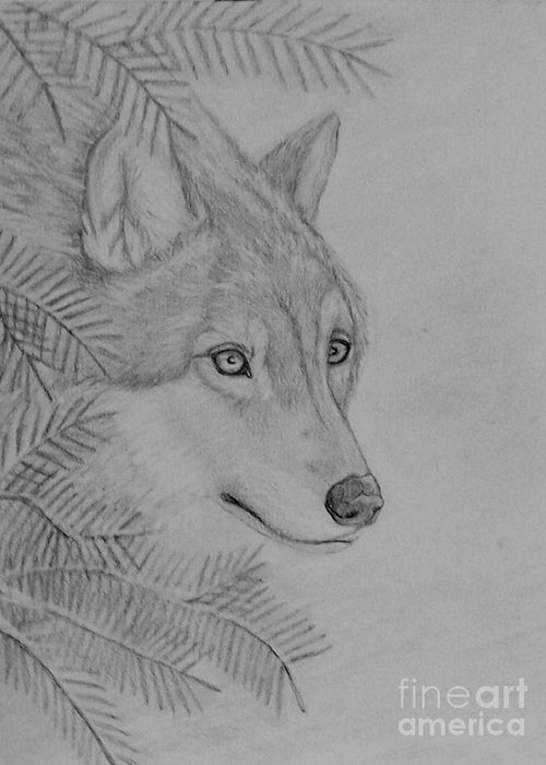 Wolf Greeting Card featuring the drawing Winter Wolf by Peggy Miller